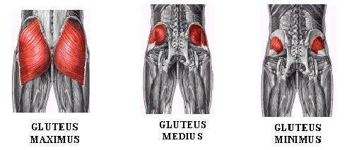 Glute-muscles-2Banatomy